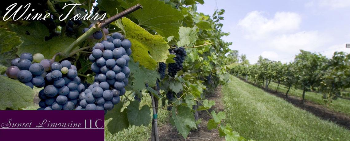 ● Wine Tours